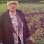 Эти томаты можно сеять в апреле. Какие сорта томатов хороши для открытого грунта в Сибири?