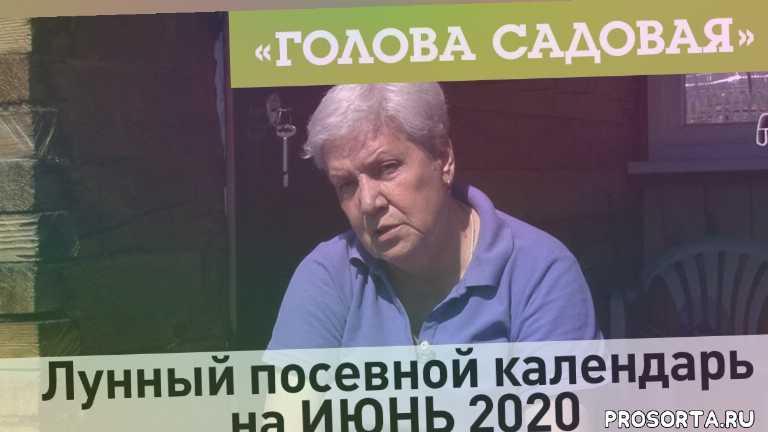 красноярск, 26 мая, 2020, календарь на июнь, посевной календарь на июнь 2020, посевной календарь, лунный посевной календарь на июнь 2020, посев