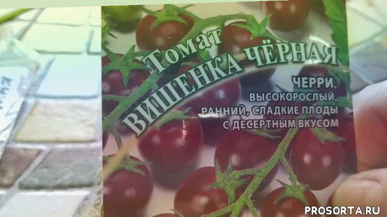 томаты 2020рассаду томатовчерри