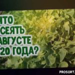 ЛУННЫЙ ПОСЕВНОЙ КАЛЕНДАРЬ НА АВГУСТ 2020 ГОДА. Агрогороскоп на август 2020