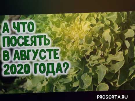 август 2020 года, агропрогноз, агрогороскоп на август 2020, лунный календарь на август 2020 года, после чеснока, урожай в огороде, урожай, горчица