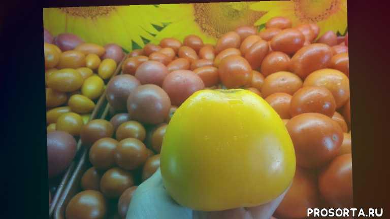 крупный вкусный томат, томат золотые купола, томаты сибирские, сад огород