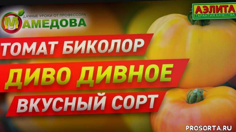 урожайные томаты, томаты для открытого грунта, теплица, сорта томатов аэлита, сорта томатов, семена томатов продажа, семена томатов 2020, семена томатов