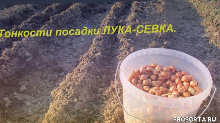 юлия минаева, пикировка рассады, обработка помидорв, сажаем томаты, посадка тыкв, посадка баклажанов, посадка огурцов, посадка перца