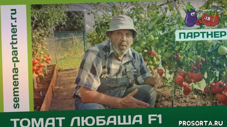 ранние сорта томатов, семена томатов, семена помидоров, лучшие семена, хорошие семена, семена, во саду ли в огороде, агрофирма партнер