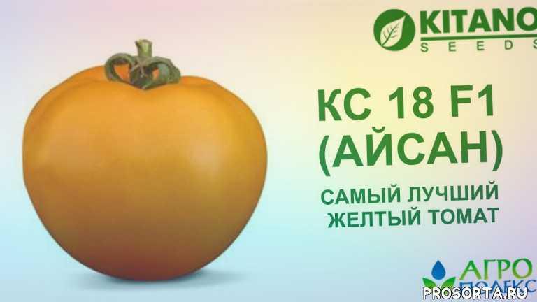 самый сладкий помидор, самый лучший желтый томат, томат ks 18 f1, томат айсан, томат кс 18