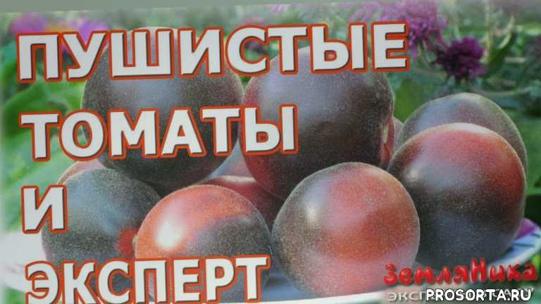 семена онлайн, интернет магазин семян, купить семена интернет магазин, семена почтой, seedspost.ru, купить семена, купить семена томатов, эксперты в саду