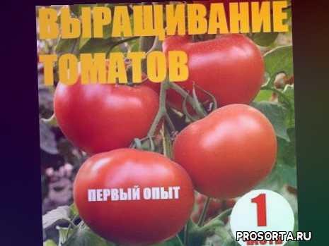 чеснок, укроп, лук, капуста, томат, цветы, рассада, деревня