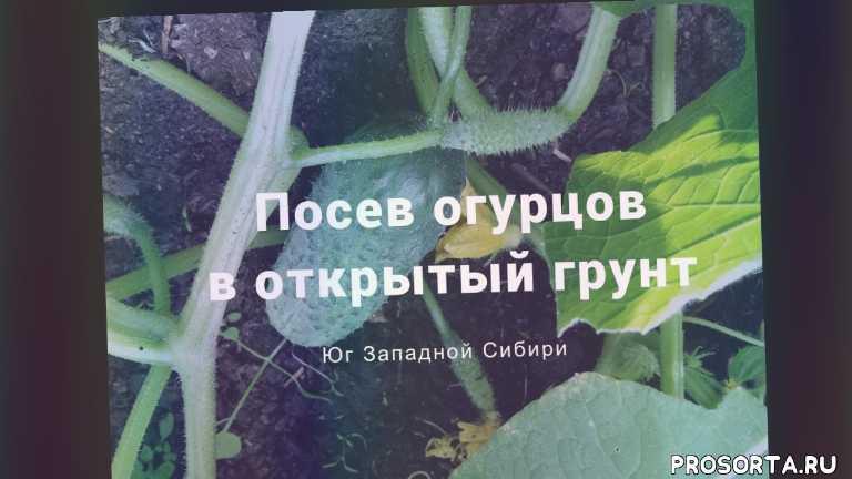 чудесный огород натальи, цветы, урожай, дача, огоро, сад, как посеять огурцы, когда сеять огурцы