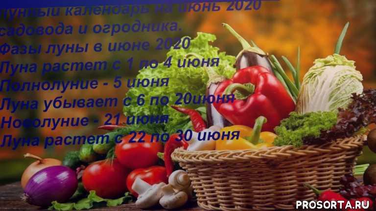 Лунный календарь на июнь 2020 садово - огороднический