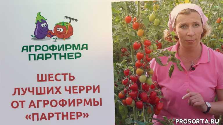 черри краски, интернет магазин семян, семена почтой, семена томатов, агрофирма партнер, василий блокин-мечталин, марина рыкалина, черри ваше благородие