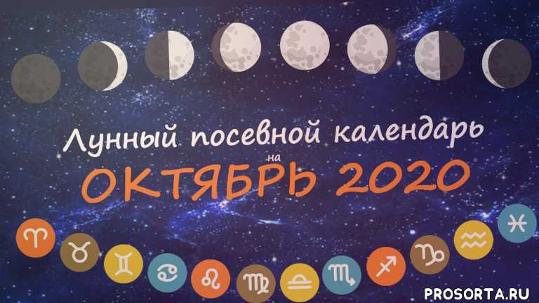 календарь садовода, октябрь 2020, посевной календарь, календарь огородника, лунный календарь садовода