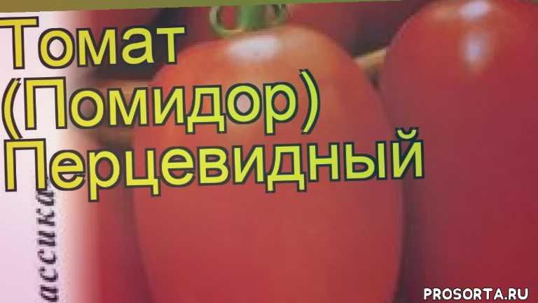 томат перцевидный какие растения сажают рядом, томат перцевидный посадка и уход, томат перцевидный уход, томат перцевидный посадка, томат перцевидный отзывы, где купить семена томат перцевидный, купить семена томата перцевидный, семена томат перцевидный