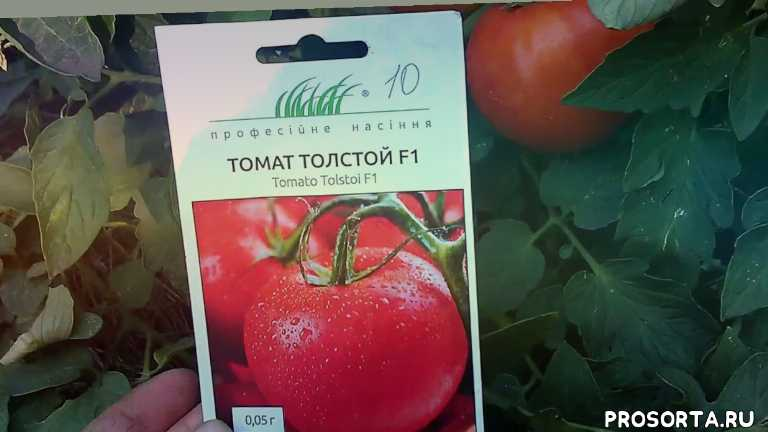 урожайный, крупный, гибрид, сорт, лучший, 2018, помидоры, толстой f1