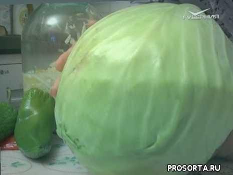 овощи, сажать, семена, капуста