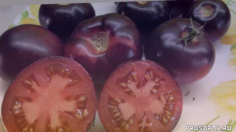 коллекционный сорт, редкие томаты, аметистовая драгоценность, обзор томатов, томаты, ольга чернова