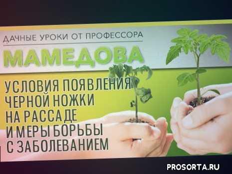 семенааэлита., семенаотаэлиты, цветники, цветоводство, цветы, уходзарассадой, рассада, посевсемян