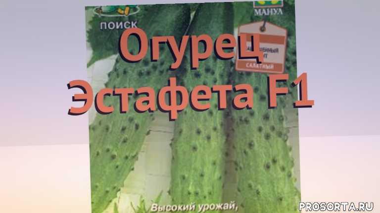 семена, семена огурца эстафета f1, огурец обыкновенный эстафета f1 обзор как сажать, огурец обыкновенный эстафета f1 обзор, огурец эстафета f1 обзор как сажать, травы, обыкновенный огурец эстафета f1 обзор как сажать, обыкновенный огурец эстафета f1 обзор