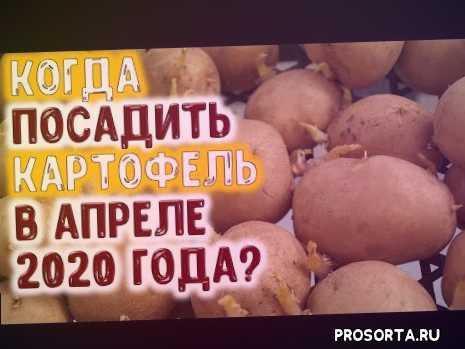 апрель 2020, лучшие дни для посева редиса, в апреле, благоприятные дни для посадки картофеля, в апреле 2020 года, когда сеять свеклу, когда сеять морковь, когда сеять редис