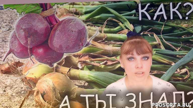 у татьяны инфо, у татьяны, урожайность, подкормка, удобрение, грядка, теплица, огород