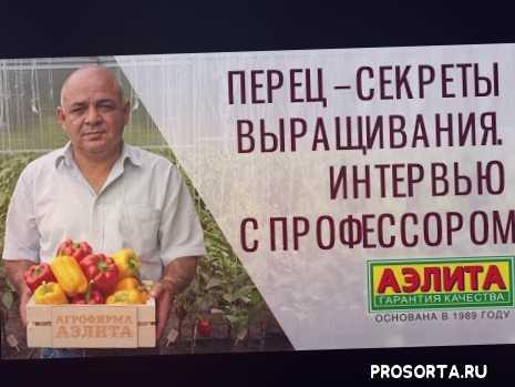 правильная посадка перца, как выращивать перец, спелый перец, растение перца, перец сладкий, секреты выращивания перца сладкого