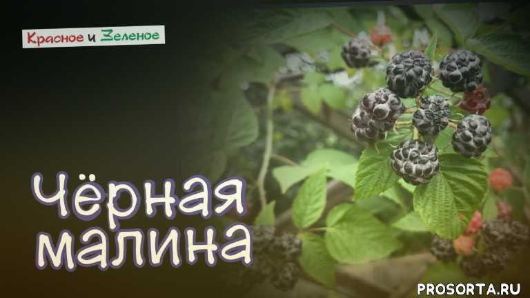 посадка и уход, выращивание уход, урожай, садовый гид, дачные советы, огород новое видео, сад огород видео, дача сад