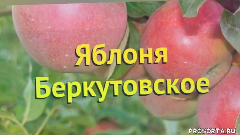яблоня какие растения сажают рядом, яблоня посадка и уход, яблоня уход, яблоня посадка, яблоня отзывы, где купить саженцы яблоню, купить саженцы яблони, саженцы яблоню