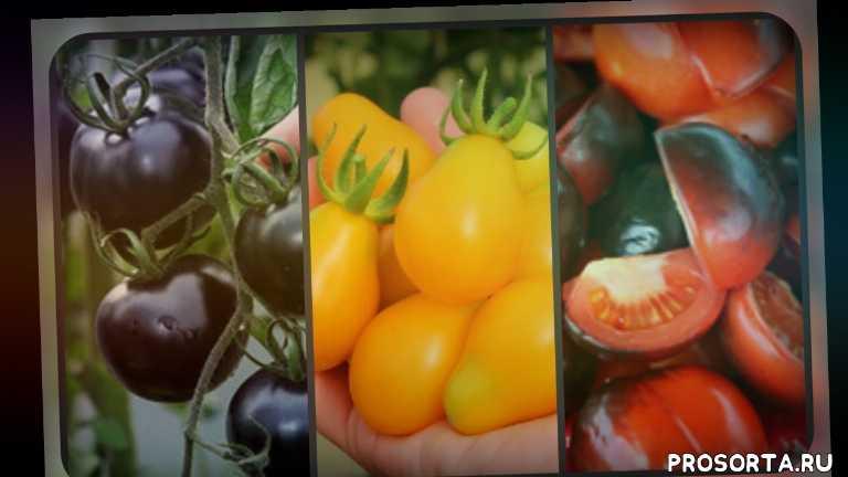 дачникам, дача, огородникам, огород, семена, томаты, томат чери, семена черри