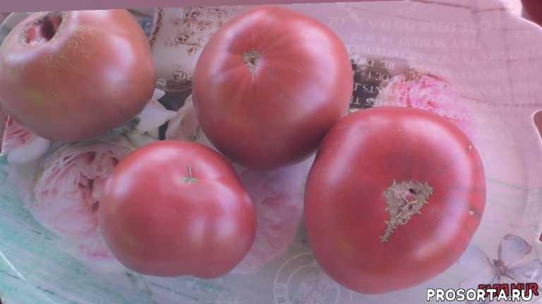 лучшие томаты лета 2019, сорта томатов для защищённого грунта, салатные томаты, самые сладкие томаты, новые сорта томатов 2019