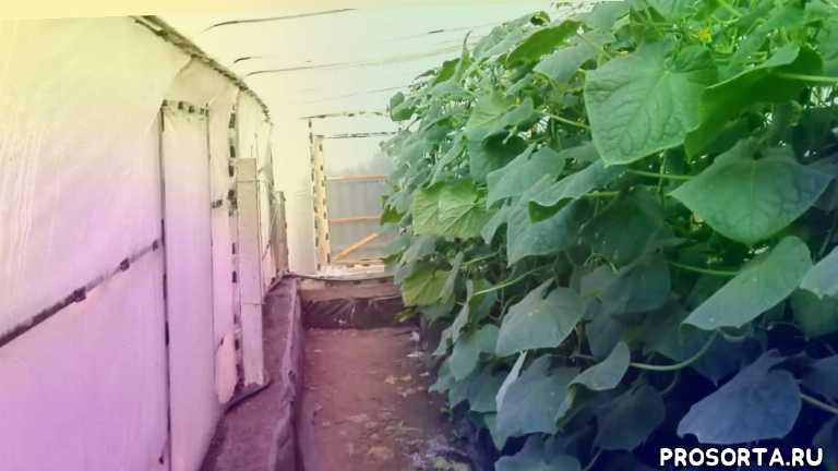 посадка, осенняя, малый, бизнес, садоводство, огород, урожайный, урожай