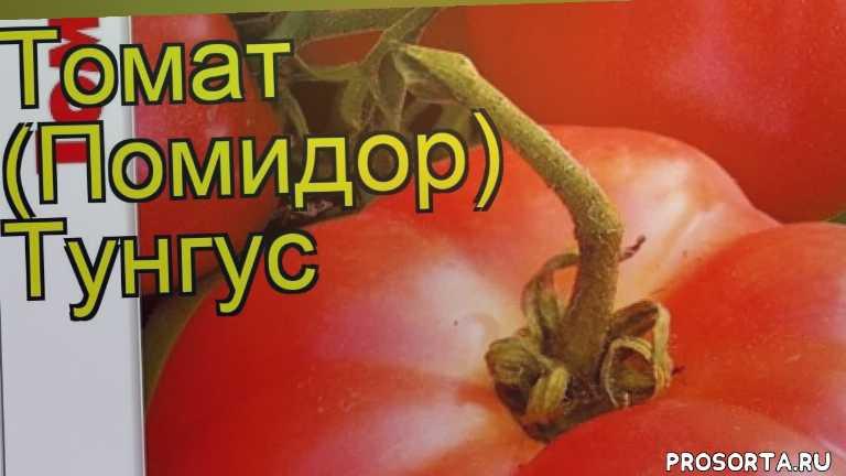 томат тунгус какие растения сажают рядом, томат тунгус посадка и уход, томат тунгус уход, томат тунгус посадка, томат тунгус отзывы, где купить семена томат тунгус, купить семена томата тунгус, семена томат тунгус