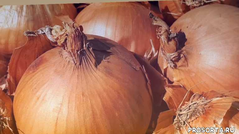 хороший урожай лука, как получить большой урожай лука, как сделать, лунный календарь огородника, на год, календарь огородника на 2019, дачник, lovisovet