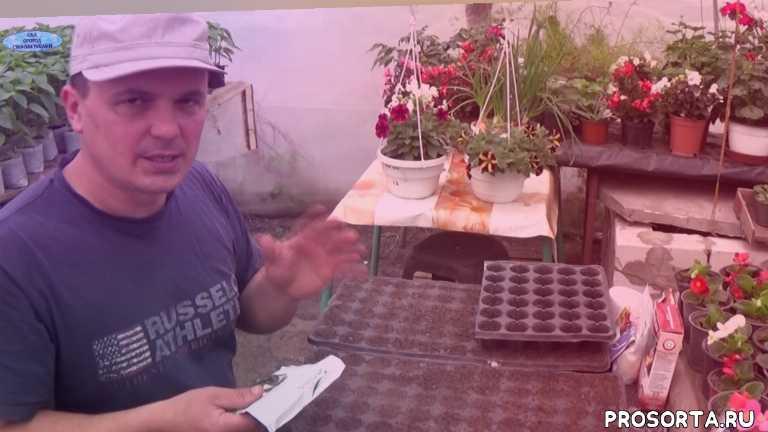 как вырастить рассаду огурцов, выращивание рассады огурцов, посев огурцов, огурцы