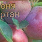 Яблоня ранний Спартан (malus spartan) ? яблоня Спартан обзор: как сажать саженцы яблони Спартан