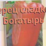 Перец сладкий Богатырь (bogatyr bogatyr) ? перец Богатырь обзор: как сажать семена перца Богатырь