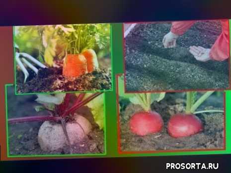 сеем редис весной, svetlana-obovsem, посев моркови, как посадить морковку, посадка морковки, как посадить морковь весной, как садить морковь весной, посадка моркови весной