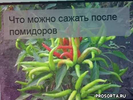 Что можно сажать после помидоров