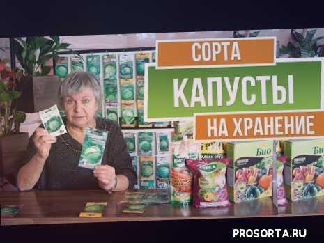 лучшая капуста для квашения, лучшие сорта капусты, сорта капусты, хранение капусты, как хранить капусту, как сохранить капусту, капуста, гибрид реактор f1