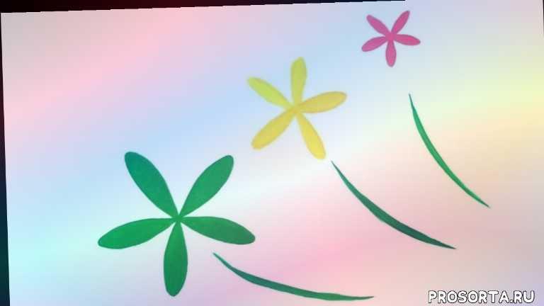 тля и муравьи, причины скрученных листьев, скрученные листья, малина