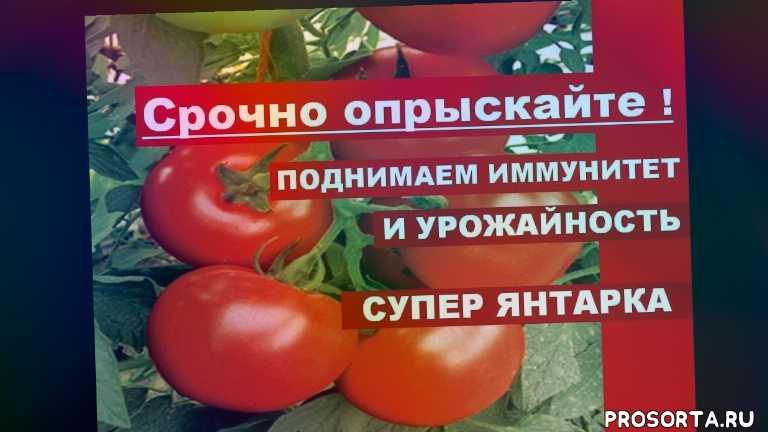 янтарная кислота для томатов +помидор, подкормка томатов в июле, янтарная кислота для огорода, янтарная кислота для цветов, кислота янтарная, янтарная кислота применение, янтарная кислота для рассады, борная кислота для помидор