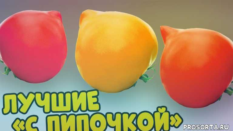 рассада, огород, сад, дача, виталий декабрев, лучшие сорта томатов, теплица томаты, открытый грунт помидоры