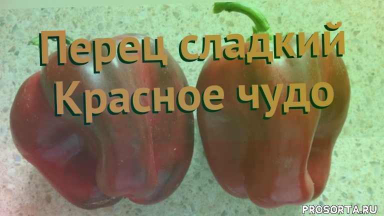 семена, семена перца красное чудо, перец сладкий красное чудо как сажать, перец сладкий красное чудо обзор как сажать, перец сладкий красное чудо обзор, перец красное чудо обзор как сажать, травы, сладкий перец красное чудо обзор как сажать