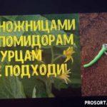 Когда нельзя проводить зеленые операции на растениях огорода и сада? Почему нельзя пасынковать в дни