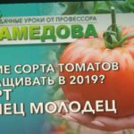 ? Какие СОРТА ТОМАТОВ выращивать в 2020? СОРТ КУПЕЦ МОЛОДЕЦ.