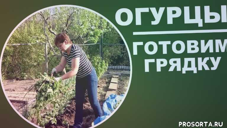урожайный огород, любимая усадьба, посадка томатов, крапива на огороде, органическое земледелие, пероноспороз огурцов, чем подкормить огурцы, семена огурцов