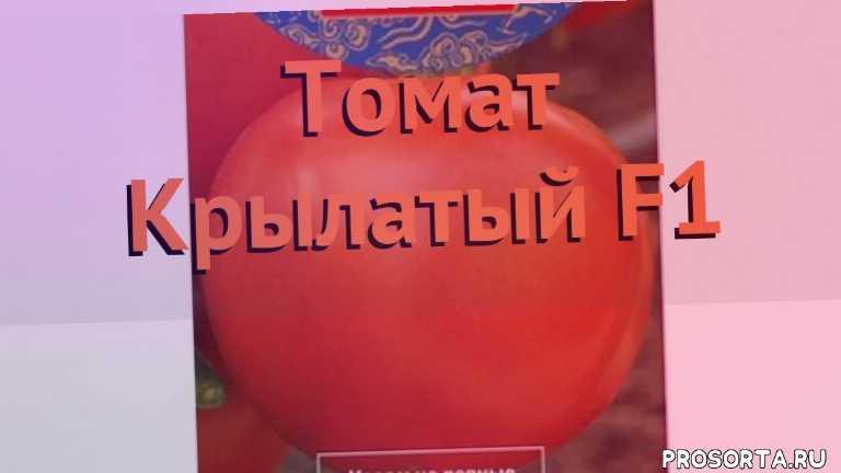 семена, томат обыкновенный крылатый f1 как сажать, томат обыкновенный крылатый f1 обзор как сажать, томат обыкновенный крылатый f1 обзор, томат крылатый f1 обзор как сажать, травы, обыкновенный томат крылатый f1 обзор как сажать, обыкновенный томат крылатый f1 обзор