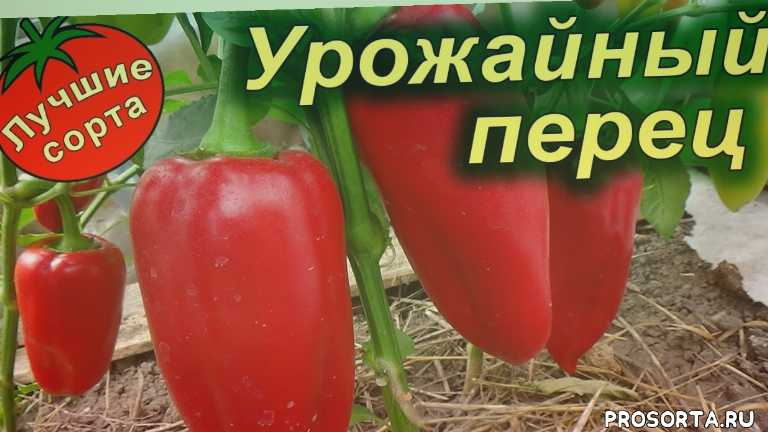 семена перца сладкого, семена урожайного перца, самые урожайные сорта перца 2019, урожайные сорта перца сладкого, урожайные семена перца, перец сладкий урожайный, урожайные сорта перца, самые урожайные перцы