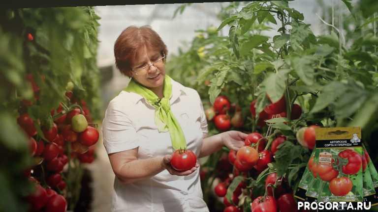 агрохолдинг поиск отзывы, агрохолдинг поиск каталог, купить семена, семена на заказ, как ухаживать, как посадить, как правильно, агрофирма поиск
