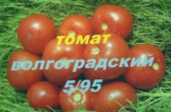 томат известный, томат востребованный, томат устойчивый к болезням, томат волгоградский 5/95, томат