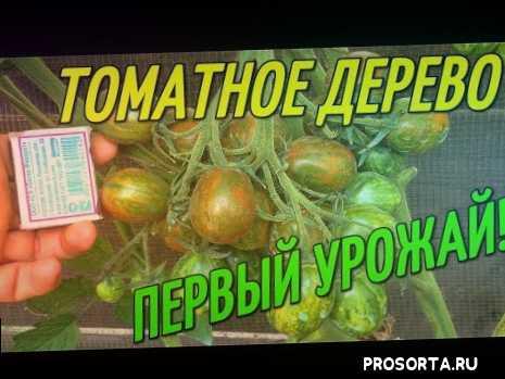 поми, томаты, клубника, огород над землей, огород над землёй, выращивание помидорного дерева, выращивание томатного дерева, помидорное дерево